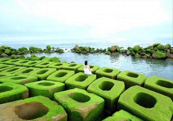 Du lịch Phú Yên - Hoa vàng cỏ xanh